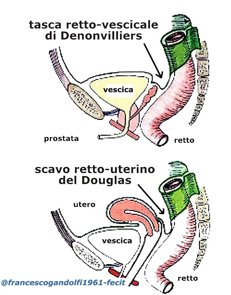 prostata stimolo defecare