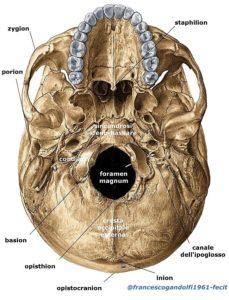base del cranio - foramen magnum