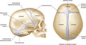 ossificazione delle ossa del neonato