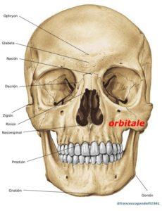 orbitlae